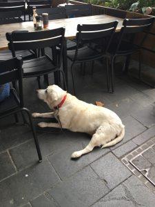 dogCulture