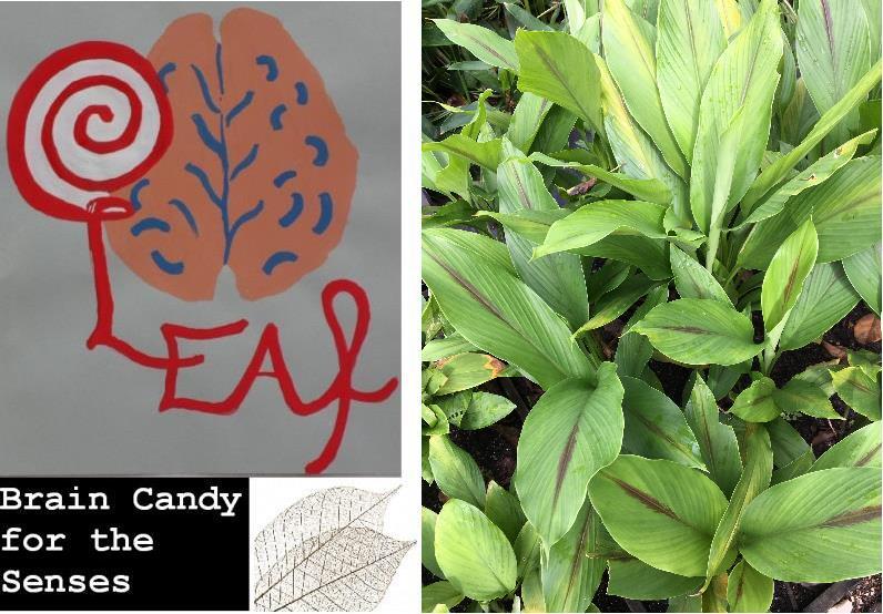Leaf Blogazine
